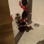 Toy soldier riding a skunk.  Skunk's wearing a tiara.  WTF.